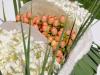 bloemenc_12_svdw